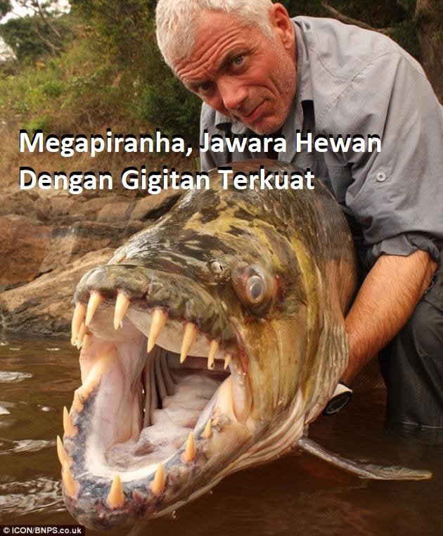 Megapiranha, Jawara Hewan Dengan Gigitan Terkuat